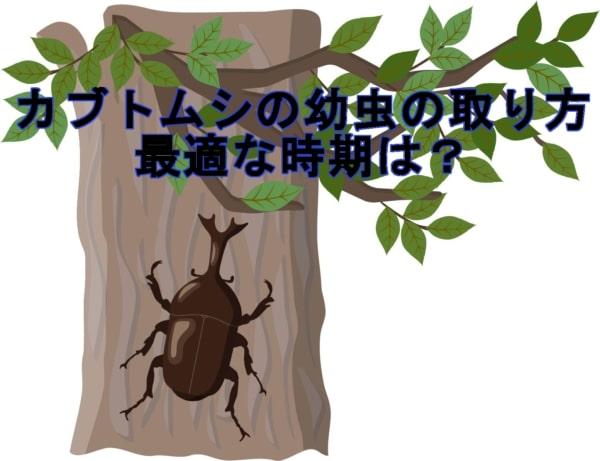 カブトムシの幼虫の取り方や最適な時期