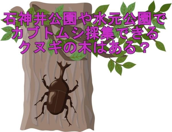 カブトムシ採集できるクヌギの木