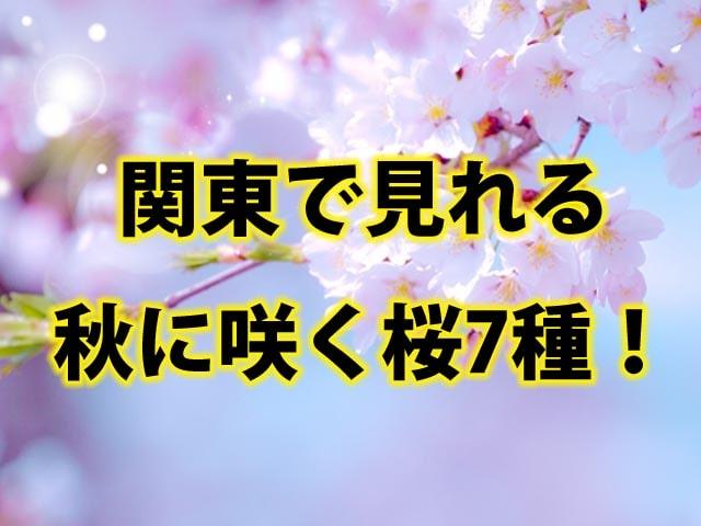 関東で見れる秋に咲く桜7種