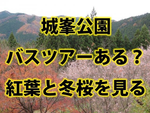冬桜と紅葉が一緒に楽しめる「城峯公園」のバスツアーについて