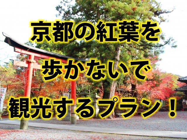 京都の紅葉を、歩かないで観光するプラン!